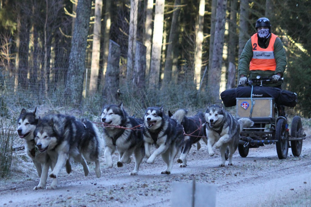 Race with 6 dogs