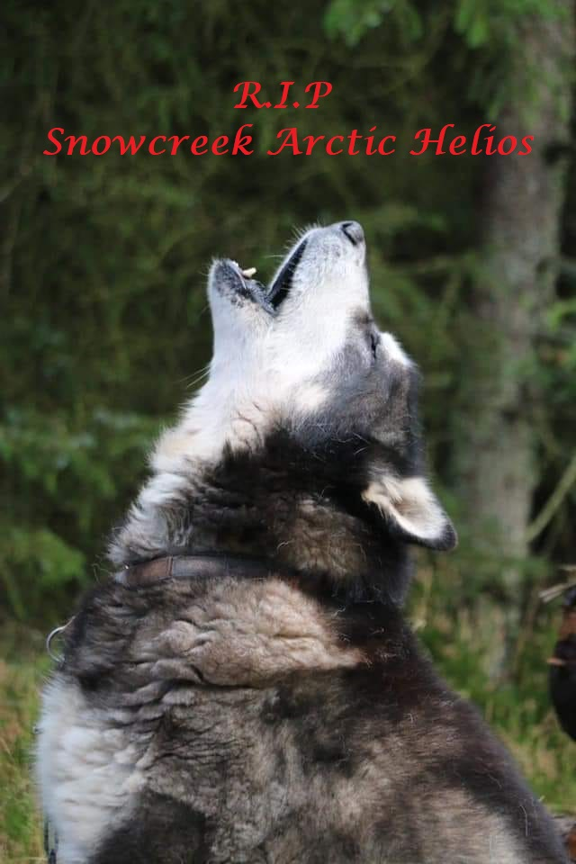 R.I.P Snowcreek Arctic Helios ... Sort/hvid ... HD: B ... Øjne: Fri